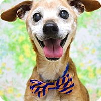 Adopt A Pet :: Freddy - Dublin, CA