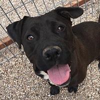 Adopt A Pet :: Grace - Lubbock, TX