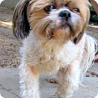 Adopt A Pet :: Jewel (Ritzy) - Lindsay, CA