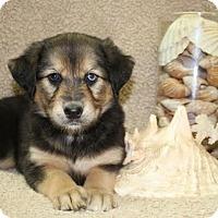 Adopt A Pet :: Cottonelle - Salem, NH