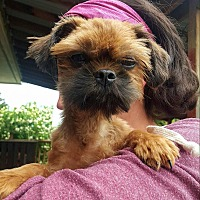 Adopt A Pet :: Chewie - Minot, ND
