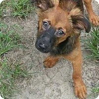 Adopt A Pet :: Comet--ADOPTION PENDING - Baton Rouge, LA