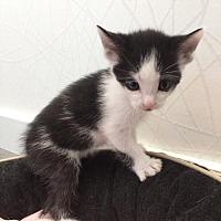 Adopt A Pet :: Bandit - Studio City, CA