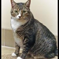 Adopt A Pet :: Amara - Wickenburg, AZ