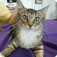 Adopt A Pet :: Tigger - Bunnell, FL