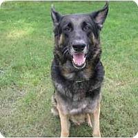 Adopt A Pet :: Rio - Green Cove Springs, FL