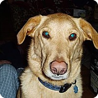 Adopt A Pet :: Obi - Richmond, VA