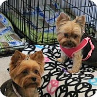 Adopt A Pet :: Lola and Penny - Hardy, VA