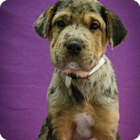 Adopt A Pet :: Purple - Broomfield, CO