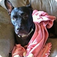 Adopt A Pet :: Rena - Medford, MA