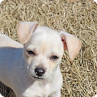 Adopt A Pet :: Mike - in Maine, PENDING - kennebunkport, ME