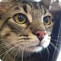 Adopt A Pet :: Jasper - Burlington, NC