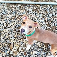 Adopt A Pet :: Hudson - Freeport, ME