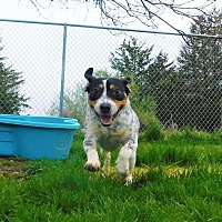 Adopt A Pet :: Boo - Lafayette, NJ