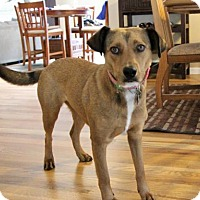 Adopt A Pet :: Beatrix - Littleton, CO