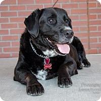 Adopt A Pet :: Shirley - Clovis, CA