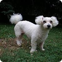 Adopt A Pet :: KATIE GRACE - Sussex, NJ