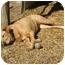 Photo 2 - Labrador Retriever/Terrier (Unknown Type, Small) Mix Dog for adoption in Portsmouth, Rhode Island - Hazel