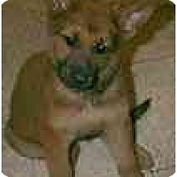 Adopt A Pet :: Jeana - dewey, AZ
