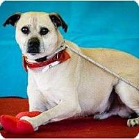 Adopt A Pet :: Shamrock - Poway, CA