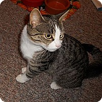 Adopt A Pet :: Thelma - New Egypt, NJ