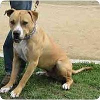 Adopt A Pet :: Tanner - Bakersfield, CA