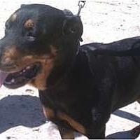 Adopt A Pet :: Betty - Fresno, CA