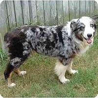 Adopt A Pet :: Skittles [Medical Hold] - Orlando, FL