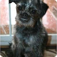 Adopt A Pet :: Taz - Los Angeles, CA