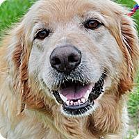 Adopt A Pet :: Samantha - New Canaan, CT