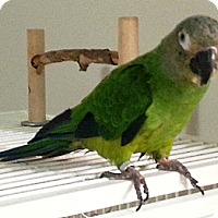 Adopt A Pet :: Emma - Lenexa, KS