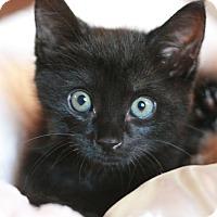 Adopt A Pet :: Jetson - Canoga Park, CA