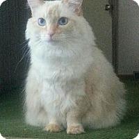 Adopt A Pet :: Heidi - Columbus, OH