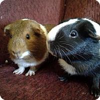 Adopt A Pet :: Crumpet & Rosie - San Antonio, TX