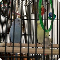 Adopt A Pet :: Peyton & Luna - Punta Gorda, FL