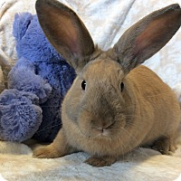 Other/Unknown Mix for adoption in Idaho Falls, Idaho - Schroedoer
