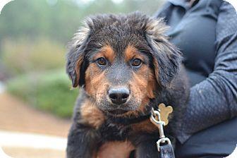 Hound (Unknown Type) Mix Dog for adoption in Acworth, Georgia - Bear