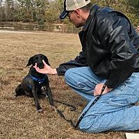 Adopt A Pet :: Felicity - Gainesville, VA
