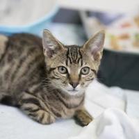 Adopt A Pet :: Pancho - Manteo, NC