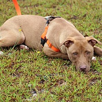 Adopt A Pet :: Wuffles - Pinehurst, NC