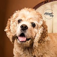Adopt A Pet :: Cooper - Cincinnati, OH