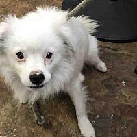 Adopt A Pet :: Glacier - Encino, CA