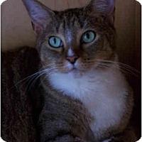 Adopt A Pet :: Jasmine - Elkton, MD