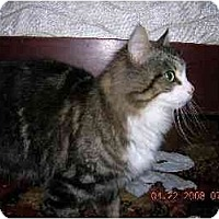Adopt A Pet :: Mimi - Union, SC