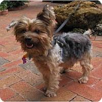 Adopt A Pet :: Jersey - Homestead, FL