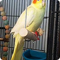Adopt A Pet :: Hayden - Lenexa, KS