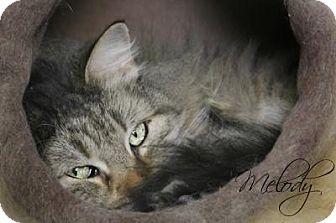 Domestic Longhair Cat for adoption in Centerton, Arkansas - Melody