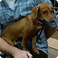Adopt A Pet :: Simpson - Phoenix, AZ