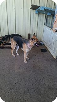 German Shepherd Dog Mix Dog for adoption in Gustine, California - MONA