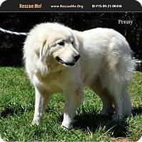 Adopt A Pet :: Penny - Lee, MA